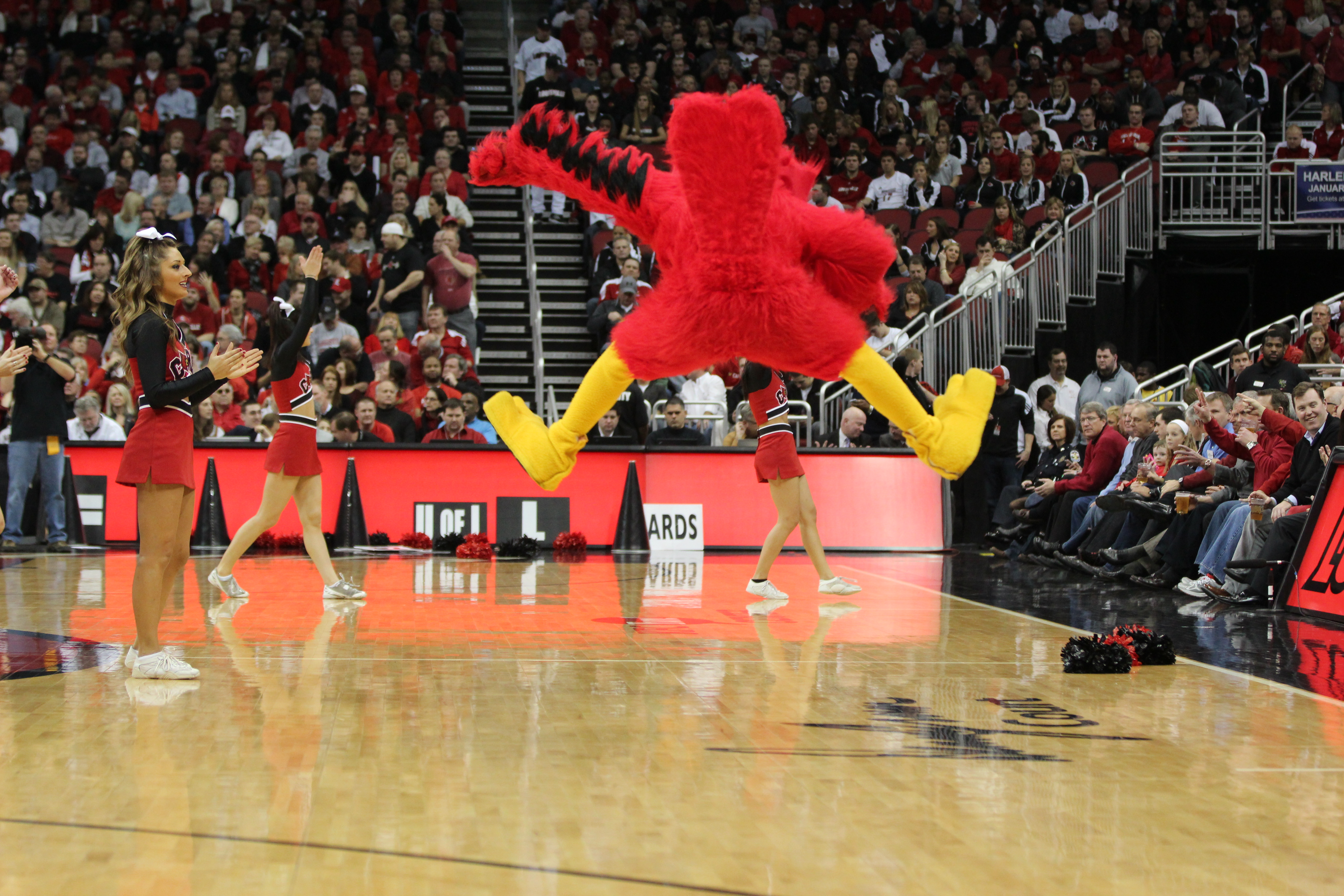 Louie the Cardinal Louisville Basketball Bird Splits Photo by Mike Lindsay