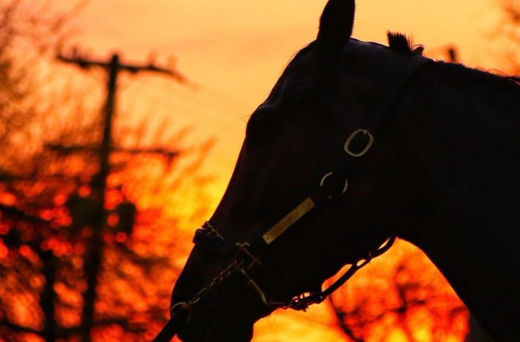 Long Range Toddy 2019 Kentucky Derby Horse Profile The